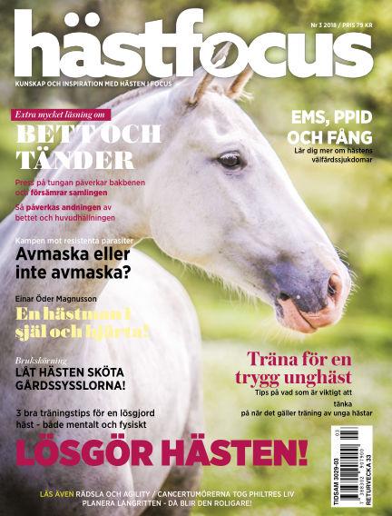 Hästfocus