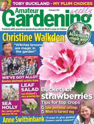 Amateur Gardening 30th August 2014