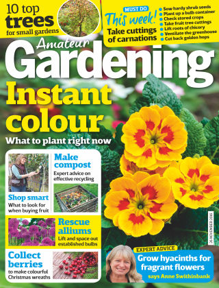 Amateur Gardening 26th November 2016