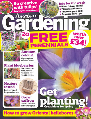 Amateur Gardening 4th November 2017