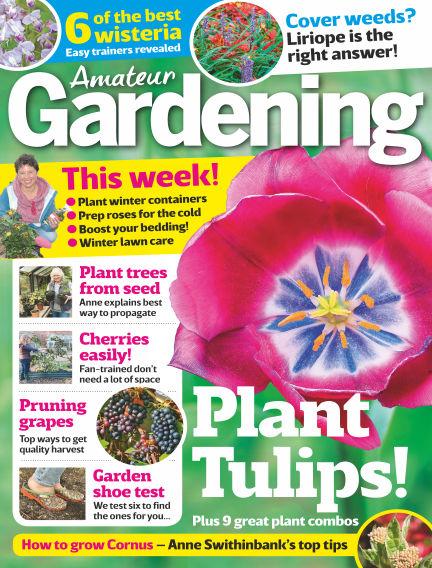 Amateur Gardening November 07, 2017 00:00