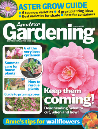 Amateur Gardening 11th August 2018