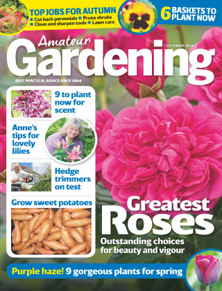 Amateur Gardening 1st September 2018