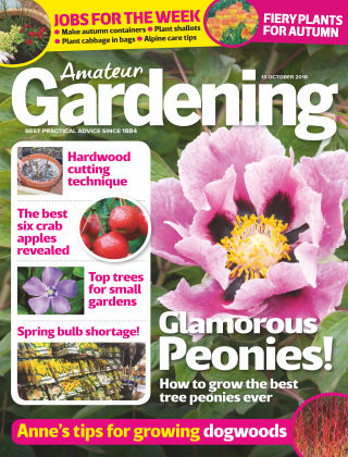 Amateur Gardening 13th October 2018