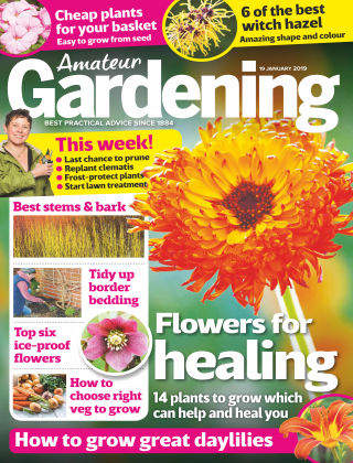 Amateur Gardening Jan 19 2019