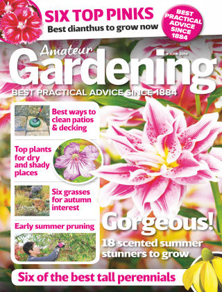 Amateur Gardening Jun 8 2019