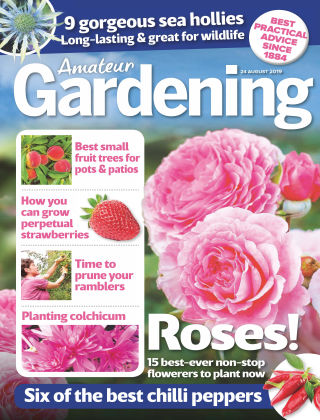 Amateur Gardening Aug 24 2019