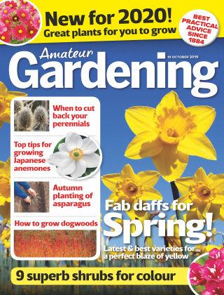 Amateur Gardening Oct 19 2019