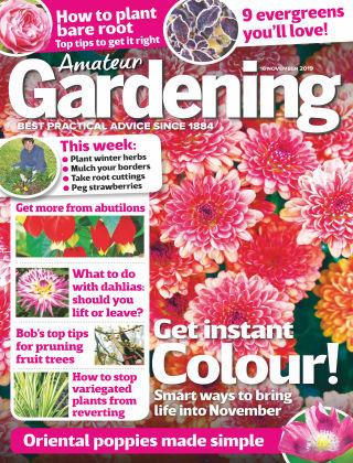 Amateur Gardening Nov 16 2019