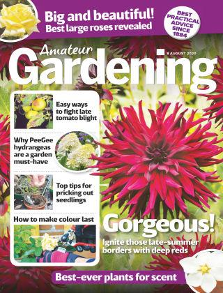 Amateur Gardening 8th August 2020