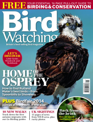 Bird Watching September 2014