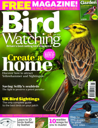 Bird Watching May 2014