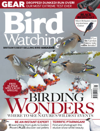 Bird Watching January 2015