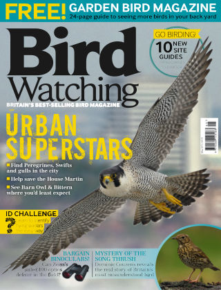 Bird Watching May 2015