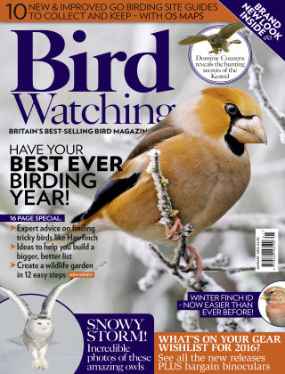 Bird Watching January 2016