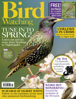 Bird Watching May 2016