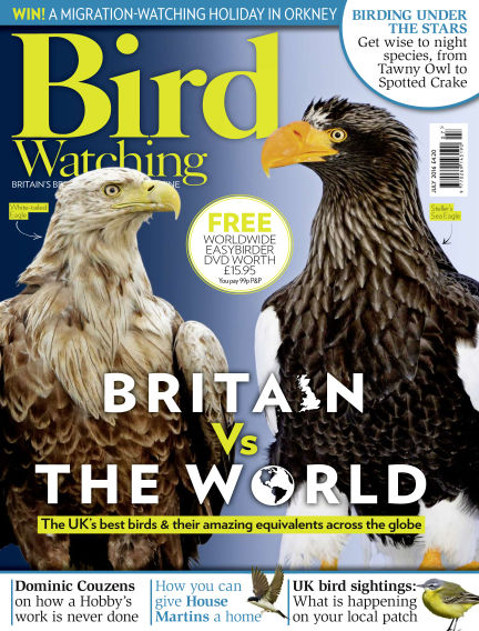 Bird Watching June 09, 2016 00:00