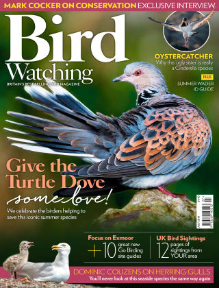 Bird Watching Jul 2018