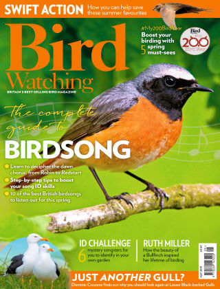 Bird Watching May 2019