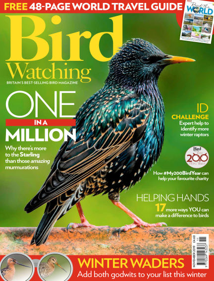 Bird Watching October 24, 2019 00:00