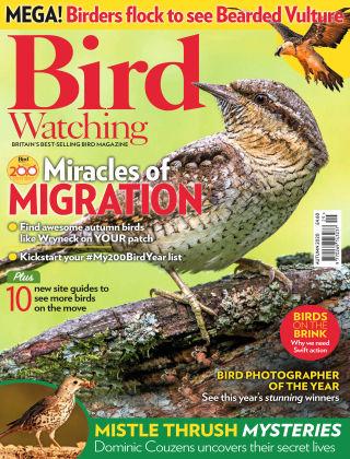 Bird Watching Autumn 2020