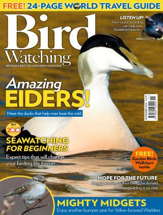 Bird Watching November 2020