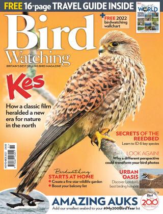Bird Watching November-21