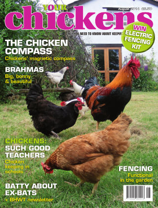 Your Chickens August 2014