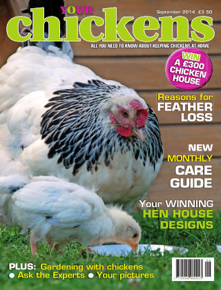 Your Chickens September 2014