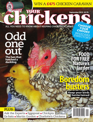 Your Chickens September 2015