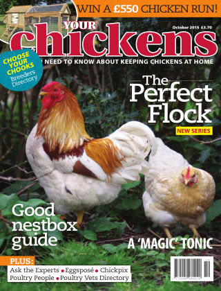 Your Chickens October 2015