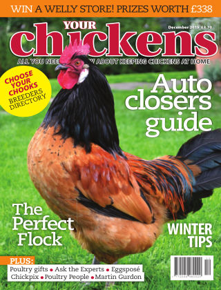 Your Chickens December 2015