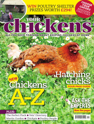 Your Chickens April 2016