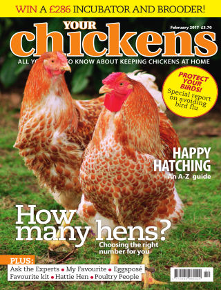 Your Chickens February 2017
