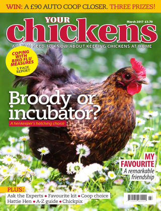 Your Chickens March 2017