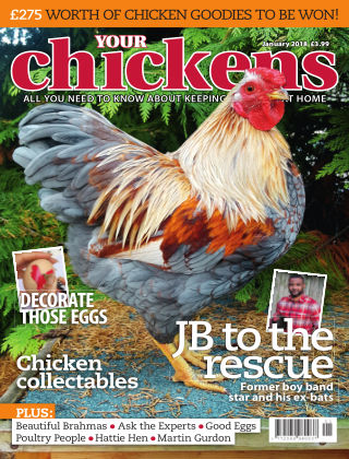 Your Chickens January 2018