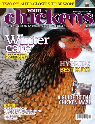 Your Chickens February 2018
