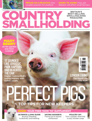 Country Smallholding November 2019