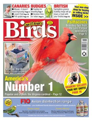 Cage & Aviary Birds 14 April 2021