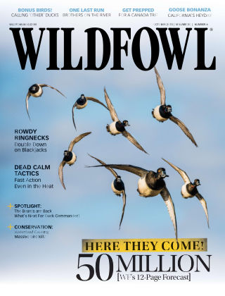 Wildfowl October 2015