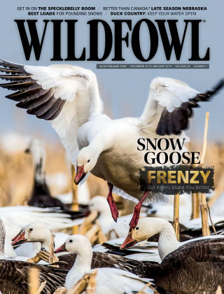 Wildfowl Dec-Jan 2019