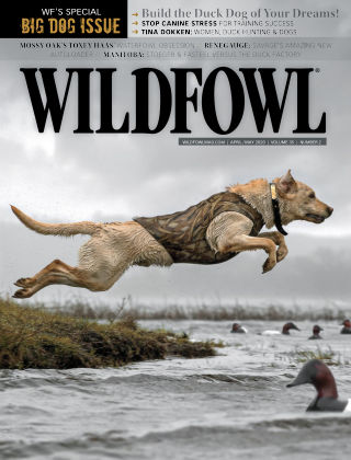 Wildfowl Apr-May 2020