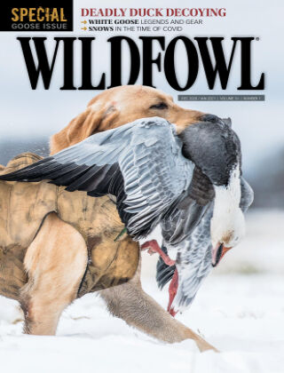 Wildfowl Dec and Jan, 2021