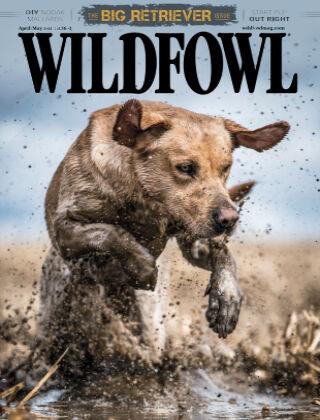 Wildfowl April May 2021