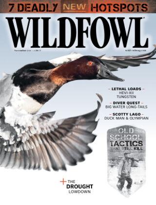 Wildfowl November