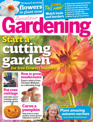 Amateur Gardening 29th October 2016