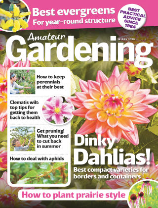 Amateur Gardening 18th July 2020