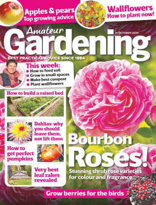 Amateur Gardening 31st October 2020
