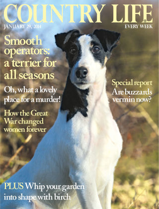 Country Life 29 January 2014
