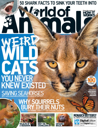 World of Animals Issue 038